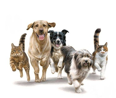dogs-and-cats-