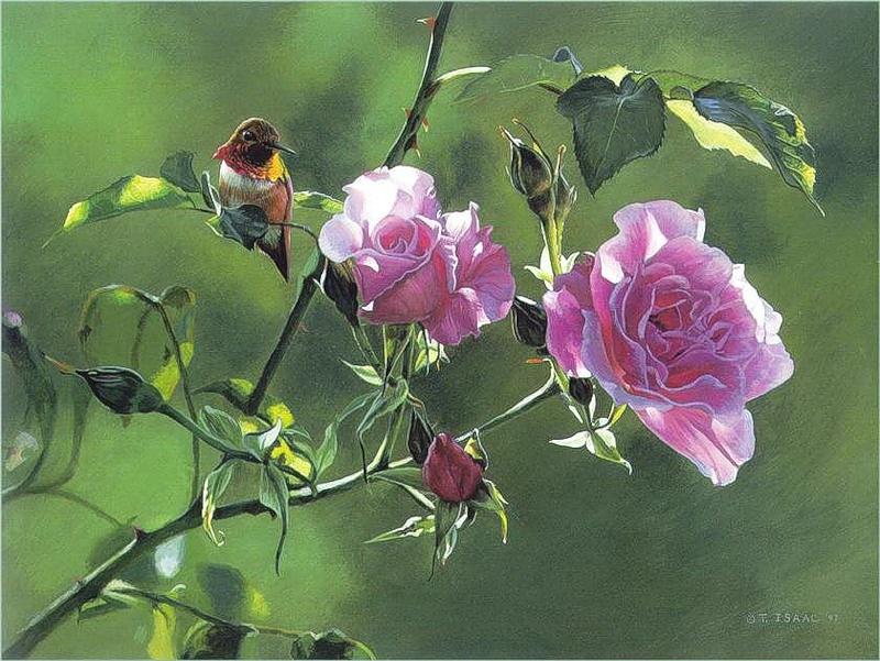 Resultado de imagem para fotos duas flores